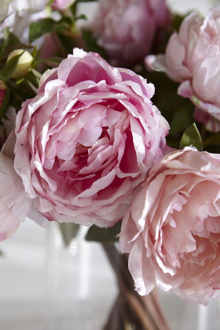182 best pink peony tearoom images on pinterest pink peonies peony flower pink peonies floral has garden ideas shops decor trees bouquets dhlflorist Images