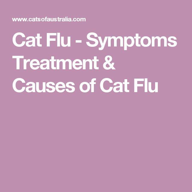 Cat Flu - Symptoms Treatment & Causes of Cat Flu