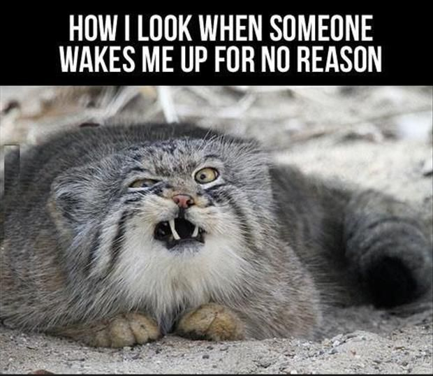 pinterest funny animals | Funny Animal Pictures – 32 Pics