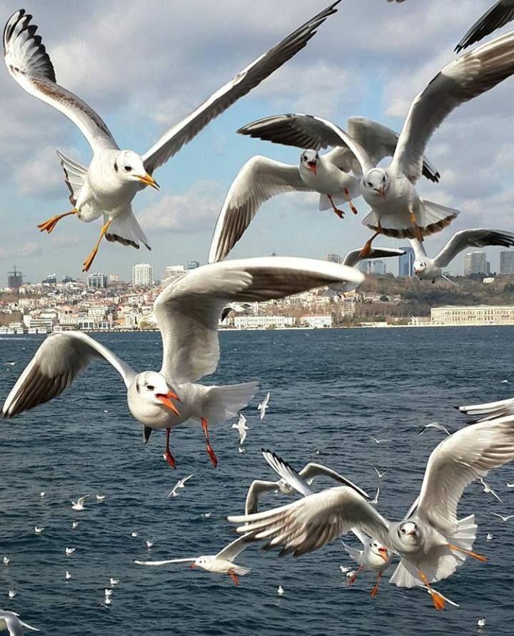 ahguzelistanbul:  İstanbul  by Mustafa Albayrak