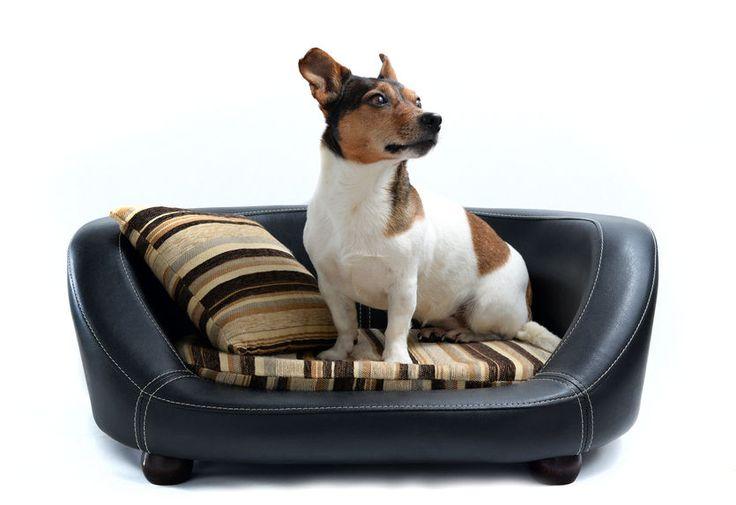Bei der riesigen Auswahl an Hundebetten stehst Du vielleicht vor der Frage: Welches Hundebett ist richtig? Es gibt ein paar Tipps, die Dir beim Kauf weiterhelfen und Deinem Hund einen gesunden, entspannten Schlaf bringen. Orthopädische Hundebetten nicht nur für Senioren Es muss nicht unbedingt ein Hundesenior sein, wenn man sich für ein orthopädisches Bett entsc [...]