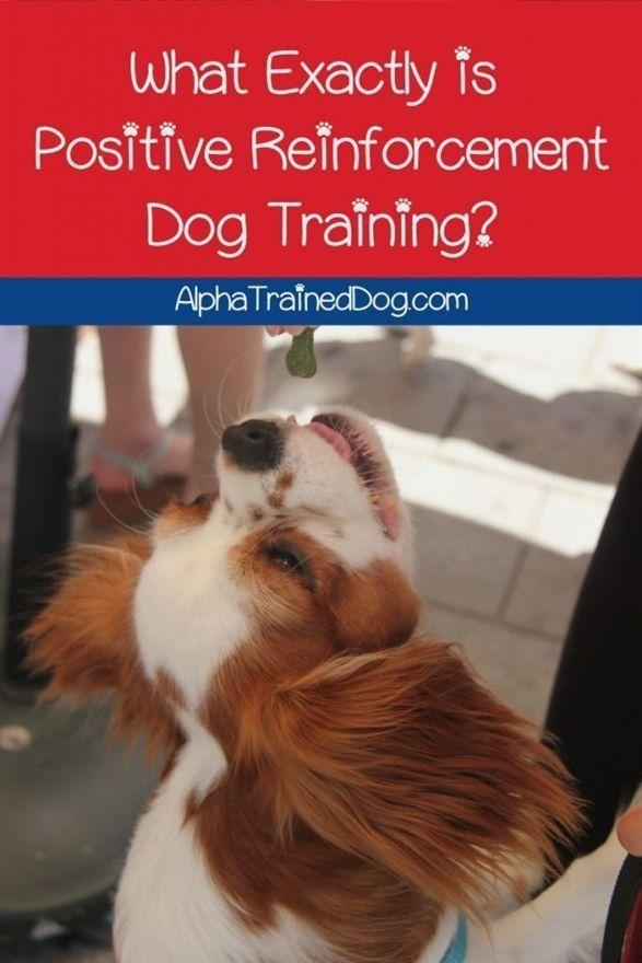 Pin On Dog Training Leash