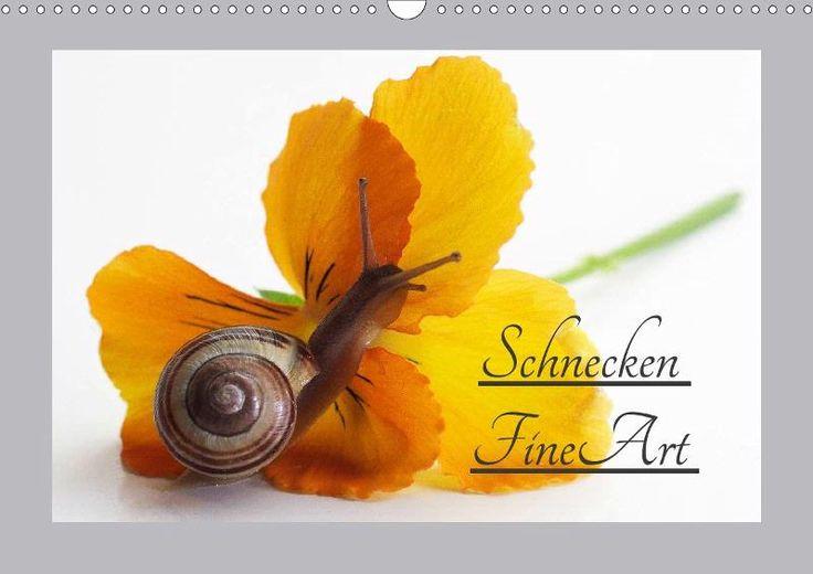 Schnecken FineArt - CALVENDO