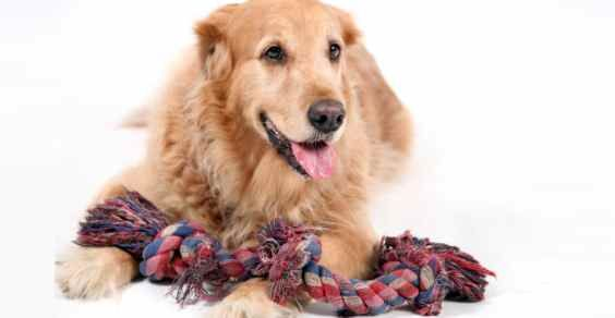 Giocattoli per cani fai-da-te