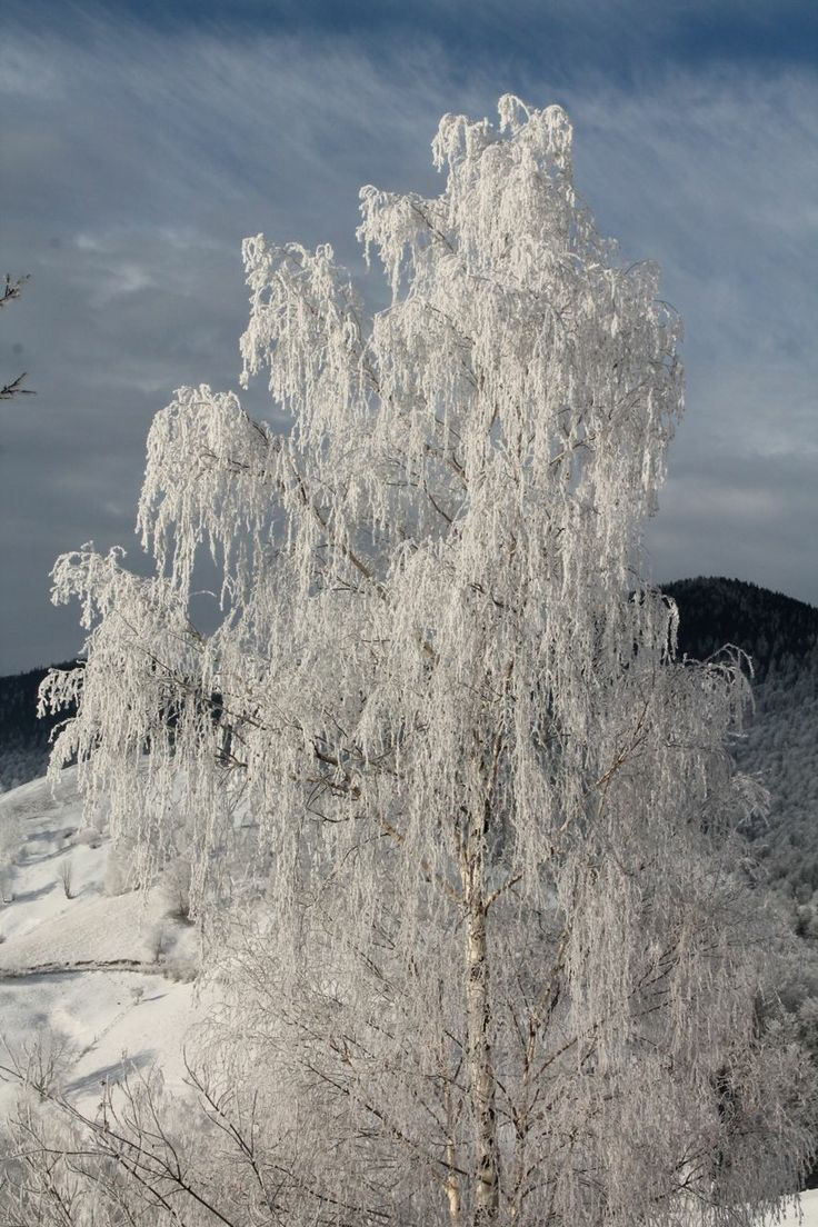 Wild tinsel. Hoarfrost 1,000, up in the Piatra Craiului national park