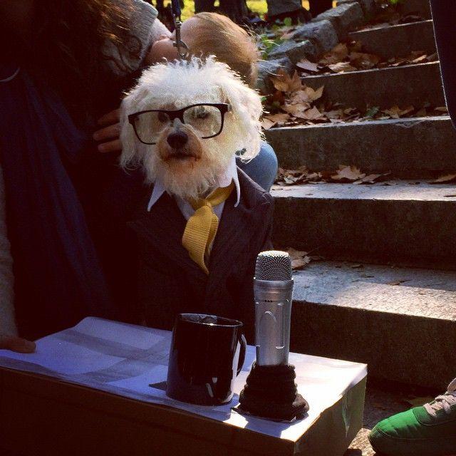 Ira Glass Dog Costume Dog Dresses Dogs American