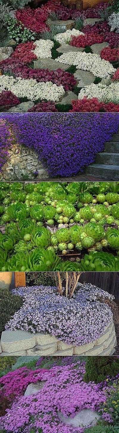 Растения-«коврики» | НА ЗАВАЛИНКЕ | Цветы | Постила