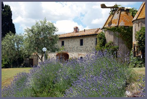In the picture we publish for the month of July, you can see in the foreground with lavanders behind the cottage to rent, on the right you can see the two old barns typical of Tuscan farmhouses   This house can be rented from April until November.