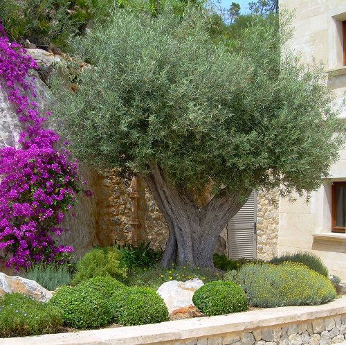 Die besten 25+ Mediterraner garten Ideen auf Pinterest - steinmauer garten kosten