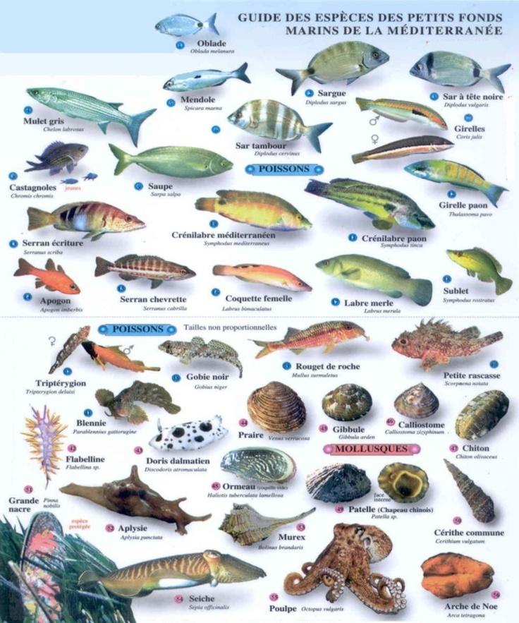11 best images about poissons m diterran e crustac s on for Aquarium poisson rouge eau
