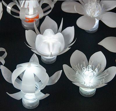 Flores con luz                                                                                                                                                      Más
