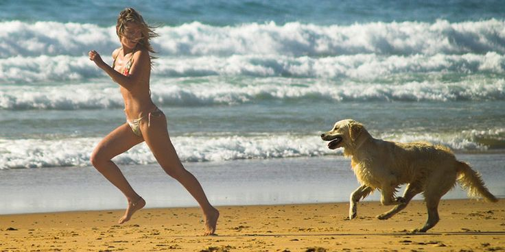 Divieto cani in spiaggia: come riconoscere i cartelli illegali?
