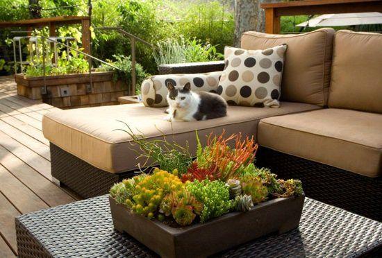 Arrangement de plantes grasses sur la table basse