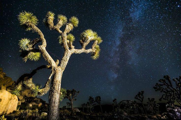 The Milky Way and Night Stars Joshua National Park California