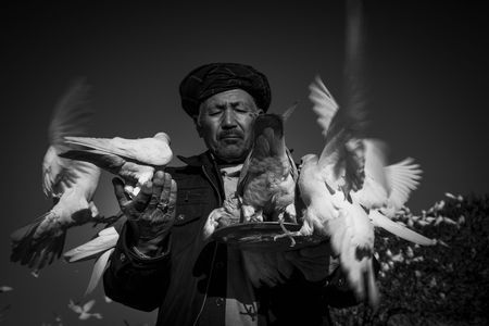 Man and doves Photo by bahareh mohamadian -- National Geographic Your Shot