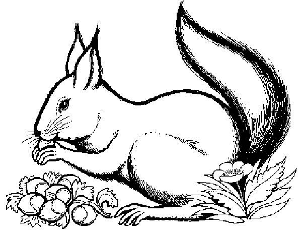 scoiattolo2 600×458  ausmalbilder tiere