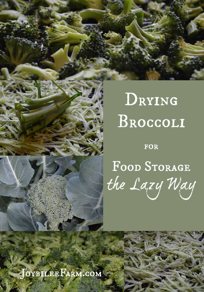 Drying Broccoli for Food Storage the Lazy Way -- Joybilee Farm