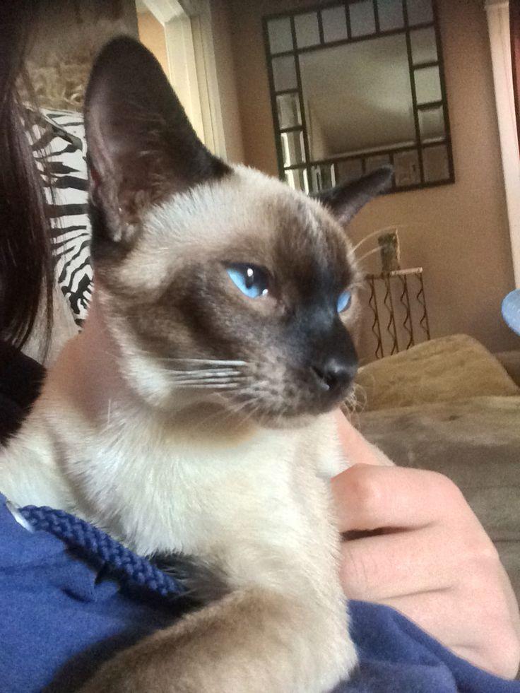 Legolas just a kitten