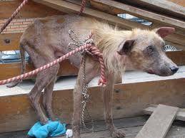animales maltratados - Buscar con Google