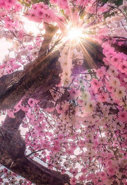 Wonderful tree                                                                                                                                                                                 More