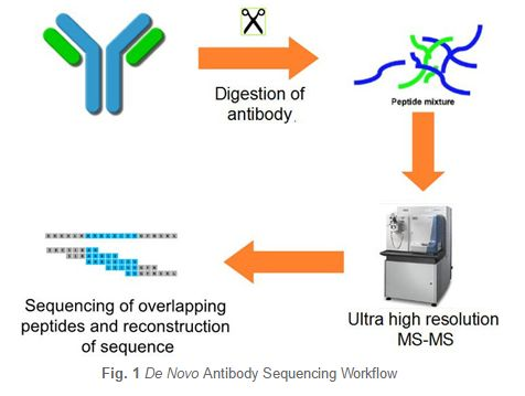 Creative Biolabs is gladly to show a series of unrivalled de novo antibody sequencing services for research, diagnostic and therapeutic industries. To overcome the current drawback of sequencing based on traditional methods, Creative Biolabs has developed the proprietary Database Assisted Shotgun Sequencing (DASS) technology, which based on our next generation antibody sequencing platform. Our services consist of variable region, variable plus leader region and full length heavy- and…