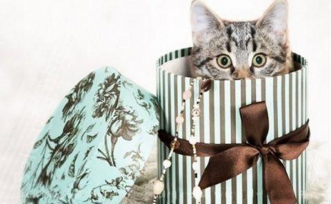 В России запретят дарить детям котят и щенков.  Россиянам могут запретить дарить детям котят и щенят, а также устраивать бои между животными. О том, что Минприроды РФ готовит масштабный пакет поправок к законопроекту «Об ответственном обращении с животными», сообщает «МК».  Документ был создан группой депутатов и внесен в Госдуму РФ еще в 2010 году, но с тех пор прошел лишь первое чтение. Теперь же чиновники доработали проект. Первое, что планируется изменить — порядок продажи и дарения…