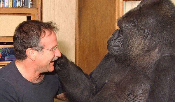 Koko The Gorilla Remembers Robin Williams