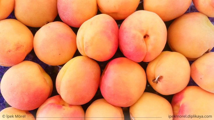 Top view of apricots