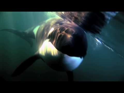 Trailer for Luna, the orphaned orca who got lost from his pod... I couldn't find the full documentary on Youtube... watched it before! They may have removed the full version, so you have to buy the DVD!
