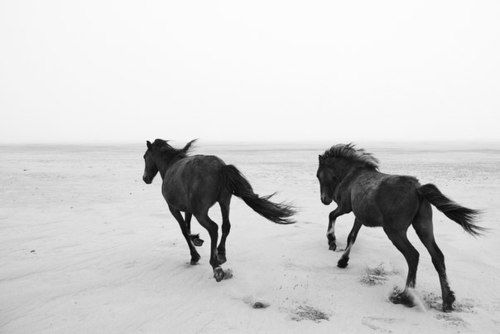 Imagem de horse, animal, and beach