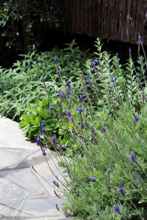 number 2 toorak design by grounded gardens