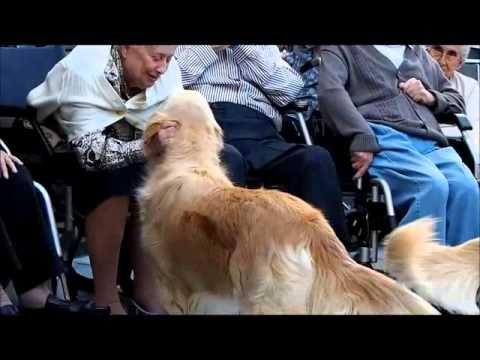 ▶ Terapia asistida con perros para ancianos, enfermos de Alzheimer y otras demencias - Dependentia - YouTube