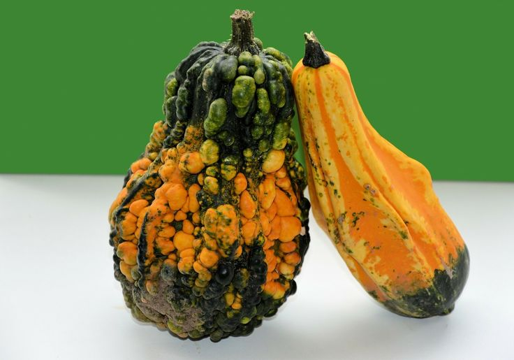 I don't know about you, but I can't wait to get my hands on some fucking gourds and arrange them in a horn-shaped basket on my dining room table. T...