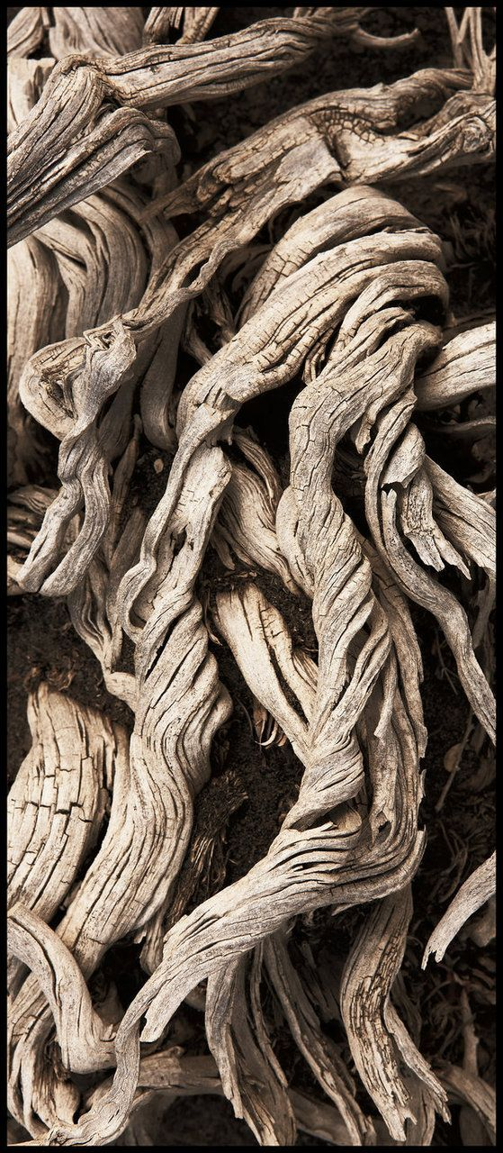 """This curly wood gives the texture of wood as well as the """"feeling"""" of it being…"""