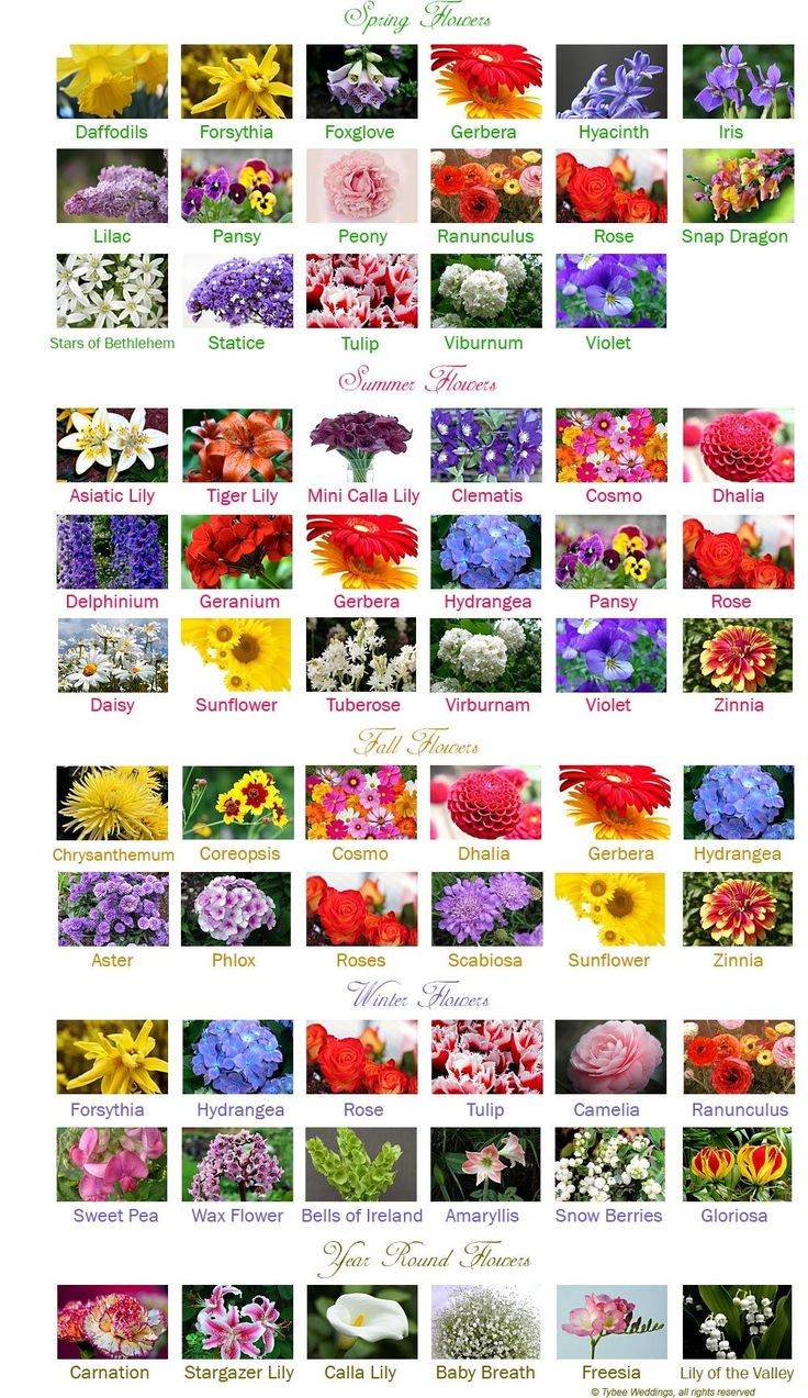 best  flower chart ideas on   wedding flower guide, Beautiful flower