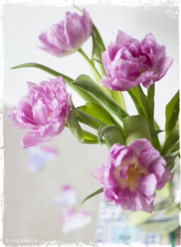 pink, inspiration, flower, blossom, tulips, colour