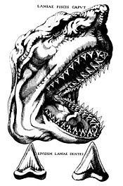 Nicolas Steno Illustration comparing teeth of a shark with fossil teeth 1667.