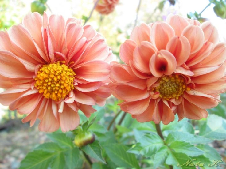 Октябрьские цветы http://modernjournal.livejournal.com/165998.html