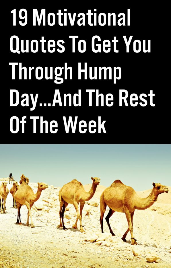 19 Motivational Quotes To Get You Through Hump Day…And The ...