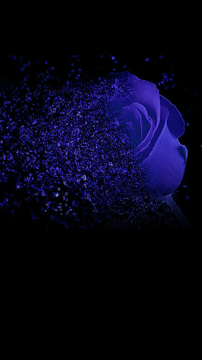 Blue Rose H5 Backdrop Black Background Sfondi Blu Rosa Blu