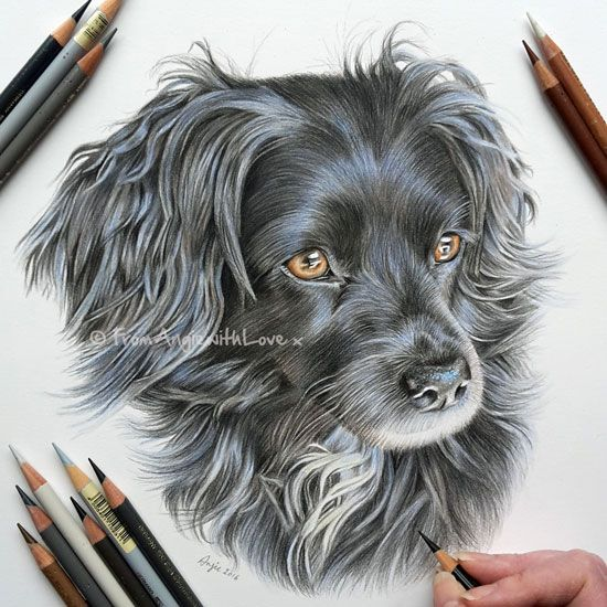 Ruby is a happy, playful, loving, and popular Spaniel that is very gentle with children – the perfect family pet. She was a delight to draw, and I wanted to make a point of capturing her bright eyes and alert posture.