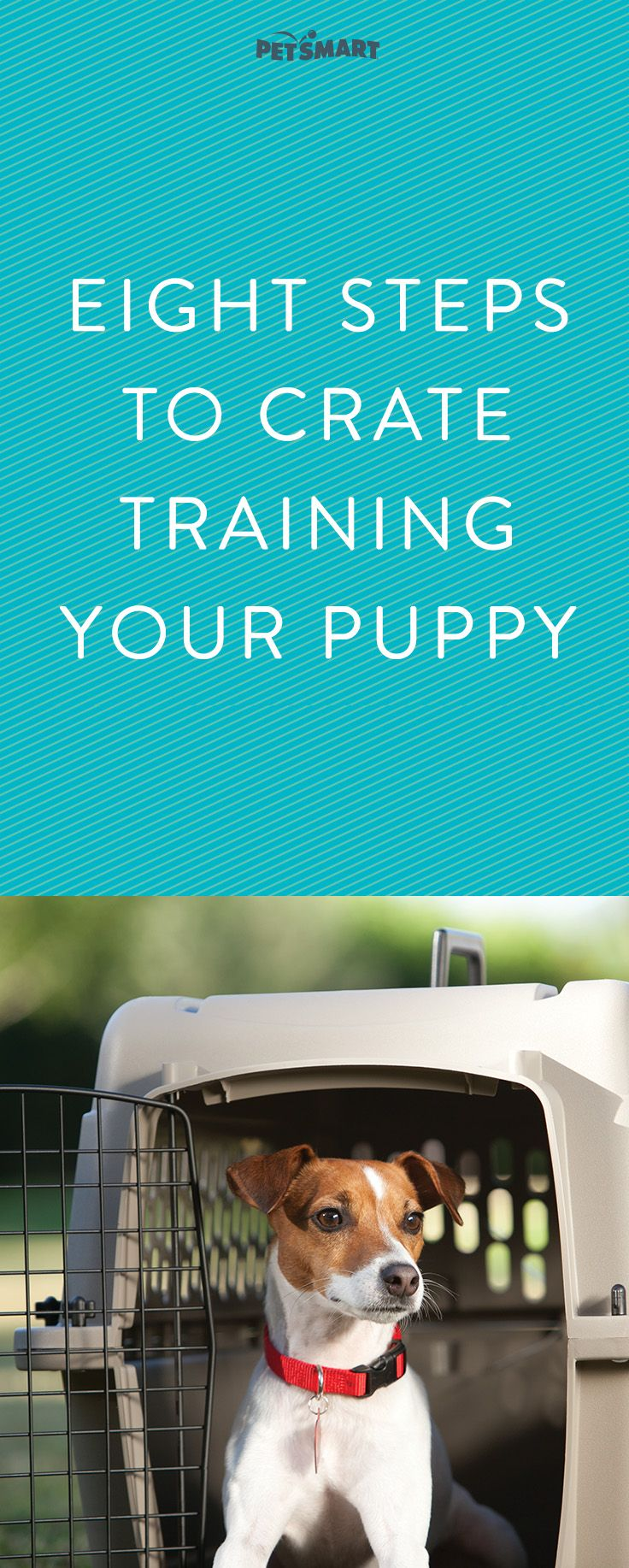 Ready to crate train puppy? Read this first.