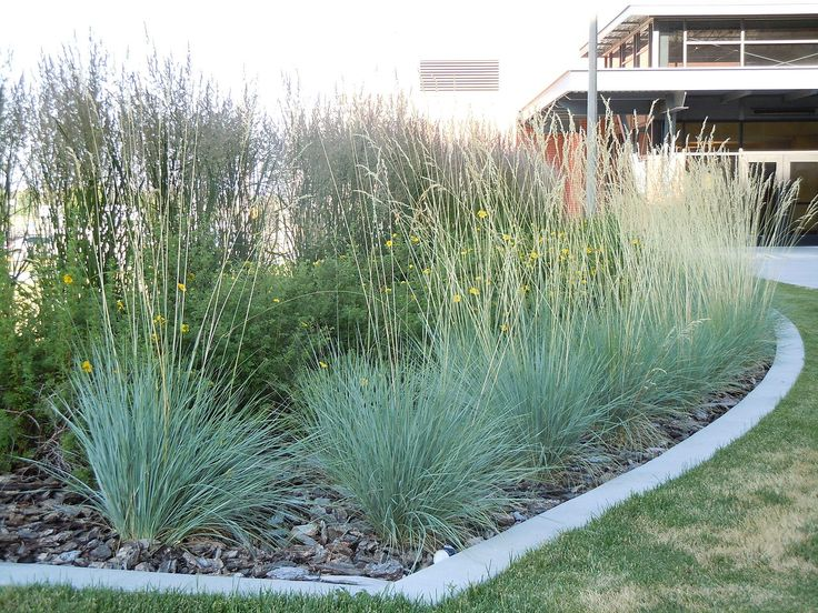 Grasses add drama to the garden. If you are looking for an attractive ornamental grass with a unique color, look no farther than ornamental blue oat grass. Click here to see how to grow this blue hued ornamental oat grass variety.