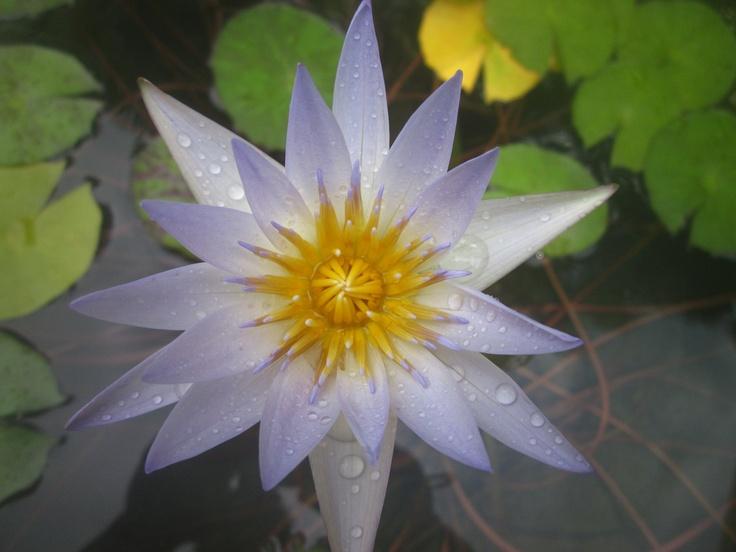 Caribbean Flowers: 229 Best Tropical Caribbean Flowers, Plants
