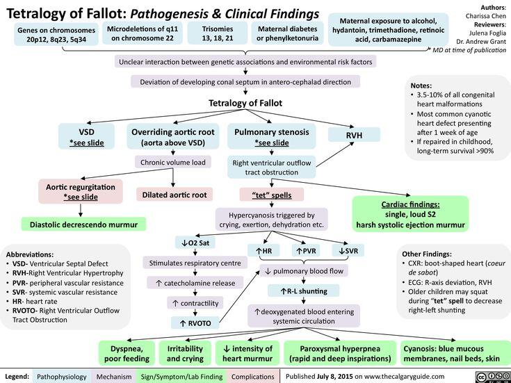 Myocardial Infarction Pathology Flowchart