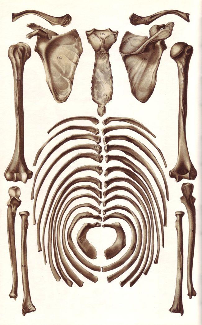 Les os, illus P. Wyss