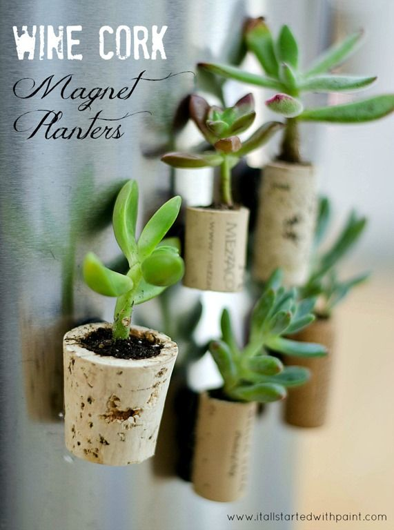 How to make wine cork magnet planters with succulents, magnets, wine corks. Full tutorial with pictures on how to make wine cork magnet planters for fridge.