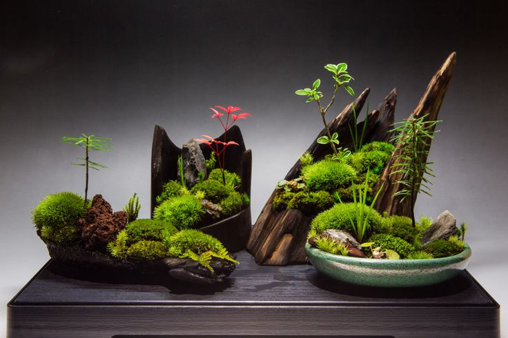 Okay, not an aquascape, but why not? Underwater landscape mimicking a terrestrial garden, mimicking nature?