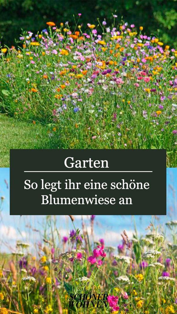 Blumenwiese Anlegen Tipps Fur Einen Bluhenden Garten In 2021 Garten Blumenwiese Anlegen Blumen Wiese