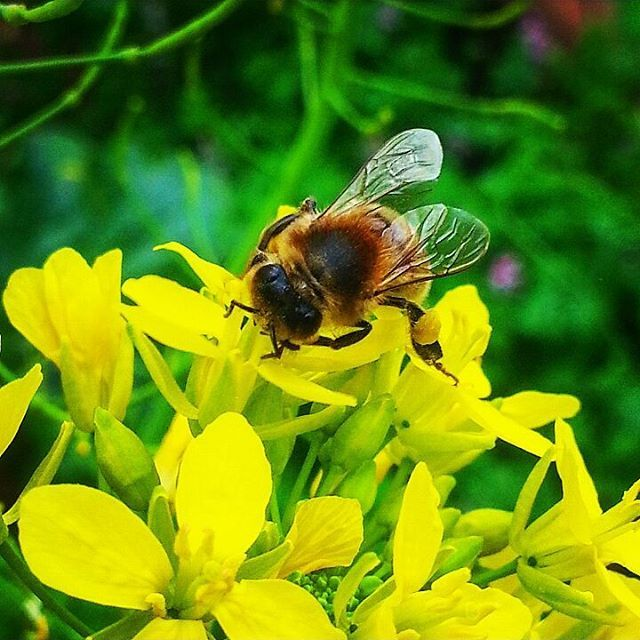 The busy bee! #gardeningwin #gardening #garden #flowers #flower #honeybees…